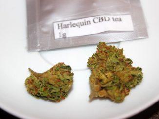 """Hygeia CBD – """"Harlequin"""" CBD Flower Review"""